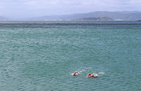 Swimming in Wellington Harbour