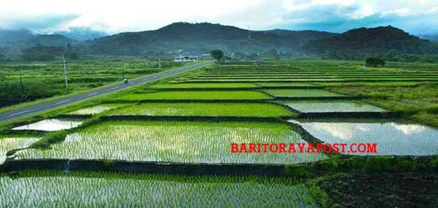 Food Estate: Pulang Pisau, Kapuas Atau Barito Timur?