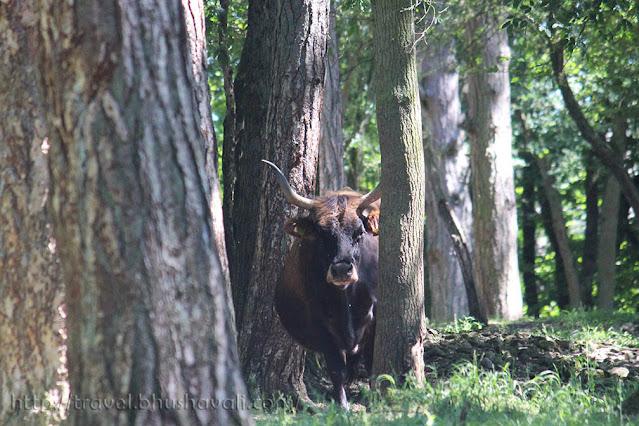 Domaine des Grottes de Han Animal Park