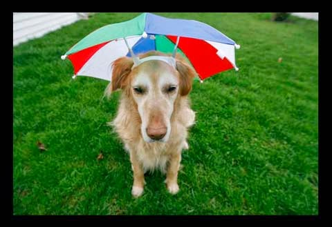Cute Couples Wallpapers For Facebook Funny Doggie Umbrella Interesting Facts Amp Latest