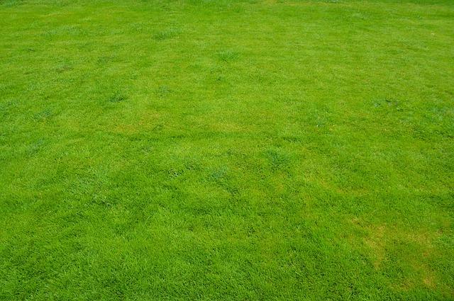 Tips Memperlambat Pertumbuhan Rumput