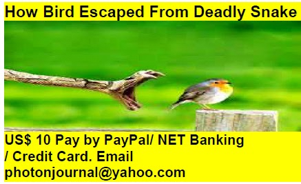 How Bird Escaped From Deadly Snake bird story book