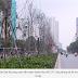 Công ty tài trợ cây phong lá đỏ sẽ thu hồi cây trong tháng 4