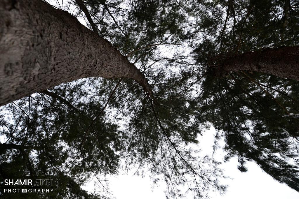 Manfaat Pokok Rhu
