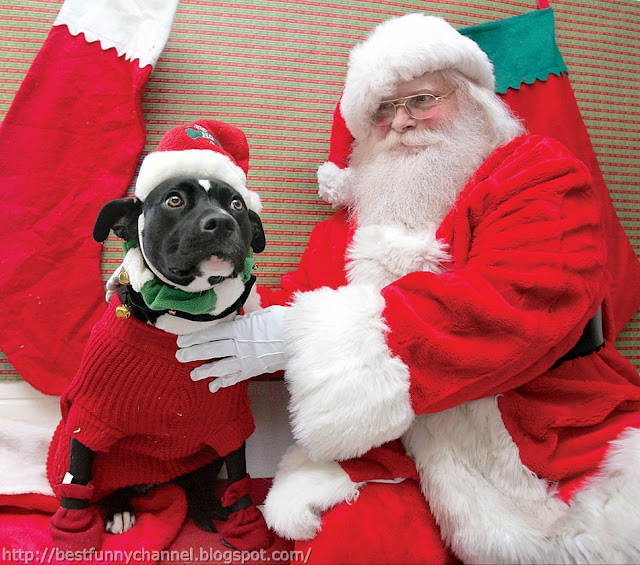 Santa and funny dog.