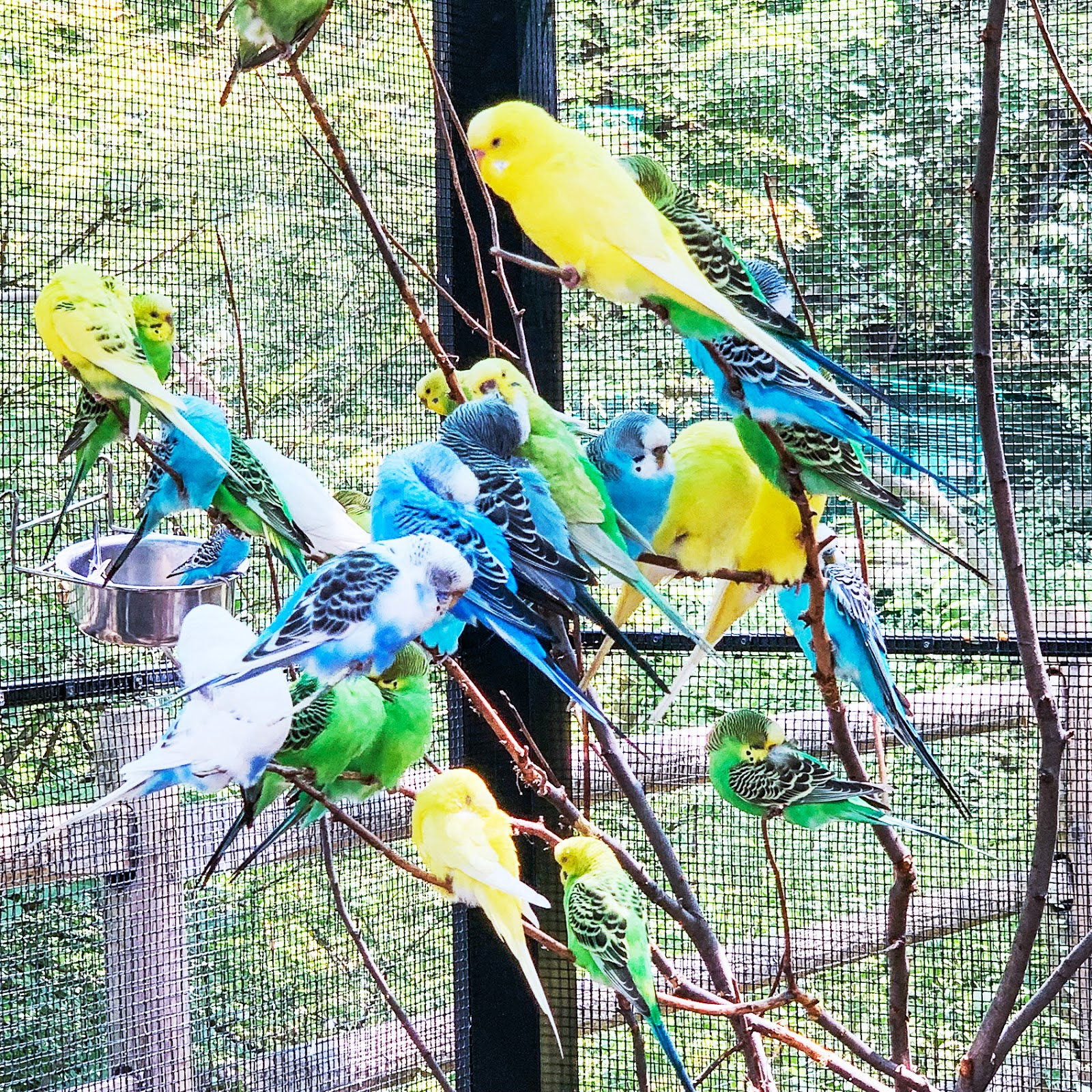 Birds in Bergen County Zoo