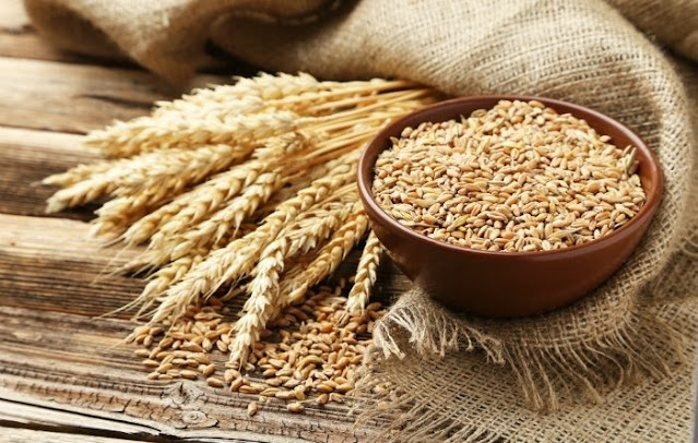 fungsi dari protein pada makanan