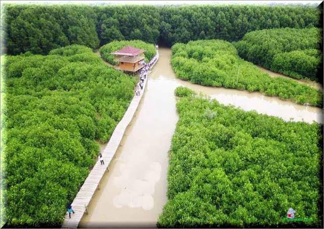 Menyusuri Hutan Mangrove : Para wisatawan menyusuri hutan mangrove sambil menikmati pemandangan wisata alam di sepanjang mangrove muara Sungai Bodo di kawasan Pantai Logending, Kecamatan Ayah.