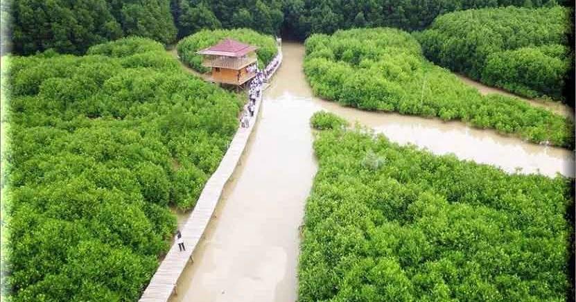 Wisata Kawasan Hutan Mangrove Pantai Kebumen, Menyusuri Edukasi Alam Daerah Mangrove - Plengdut ...
