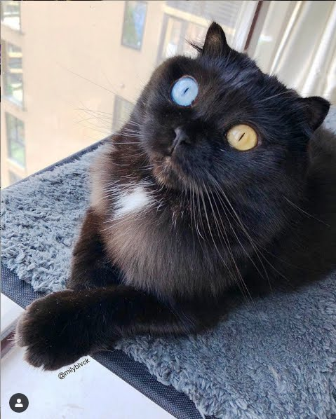 Cat With Multi-Colored Eyes Becomes Star On Instagram