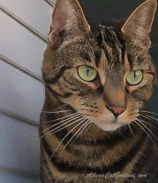 tabby cat at window
