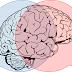 Cientistas mostram que a linguagem é aprendida em circuitos no cérebro anteriores ao surgimento evolutivo do ser humano