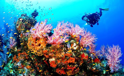 bawah laut olele