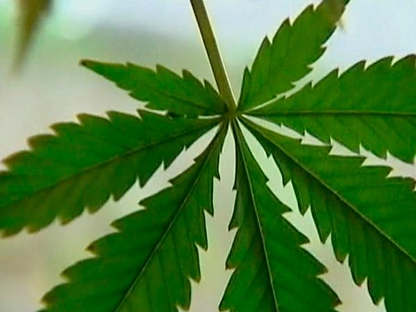 Um Homem foi preso por tráfico de drogas no Paranoá