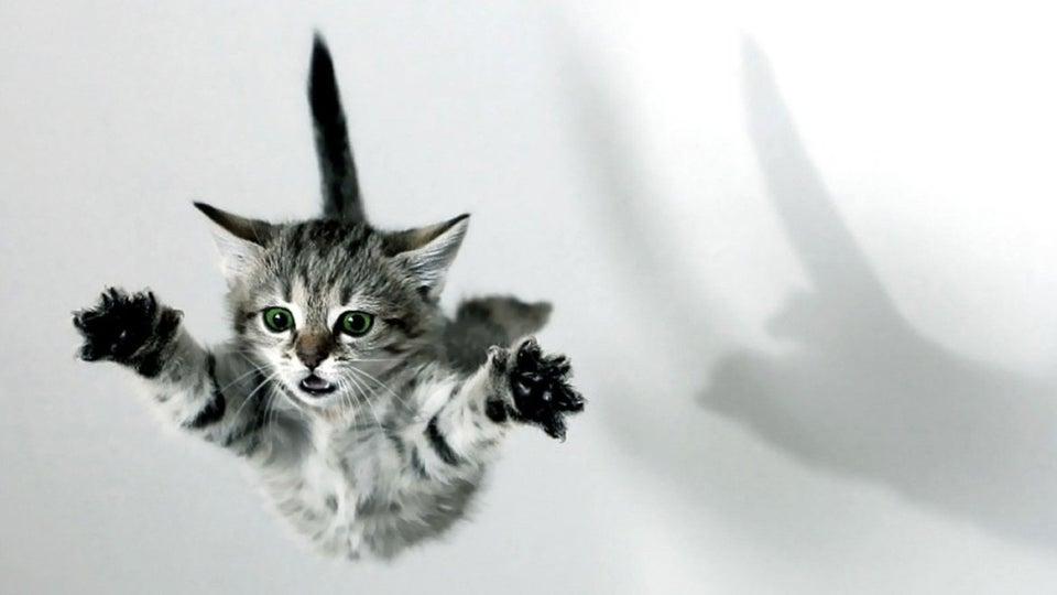 COMO GATOS CAEM EM PE COMUNICAT.PET FALLING CAT