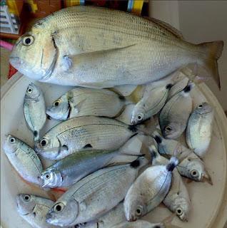 Foto de um cardume de peixes de várias espécies