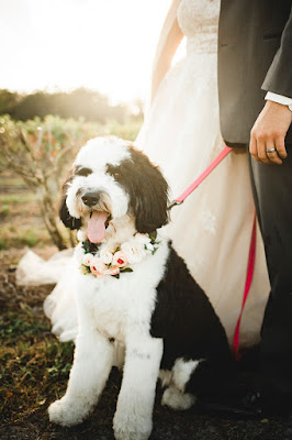 wedding dog with flowers on collar