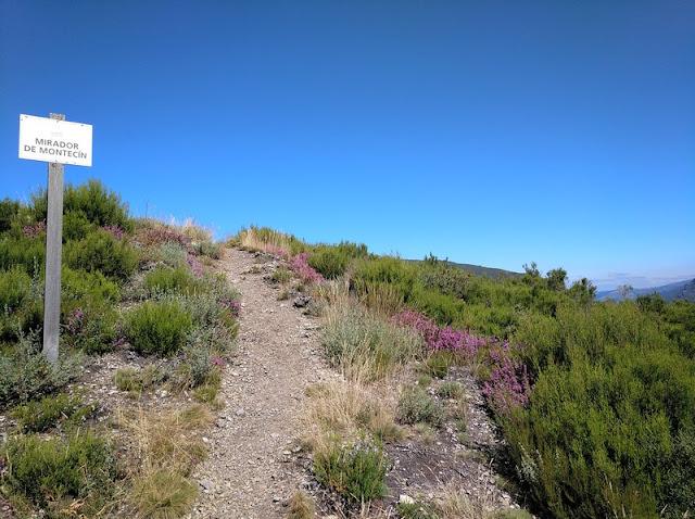 Subida final al Montecín entre brezos rojos