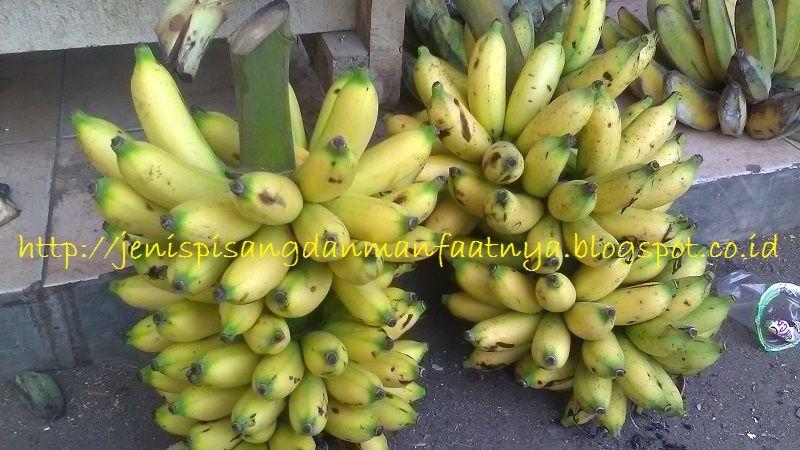 Gambar Pisang Lampung - Jenis Pisang Untuk Sale