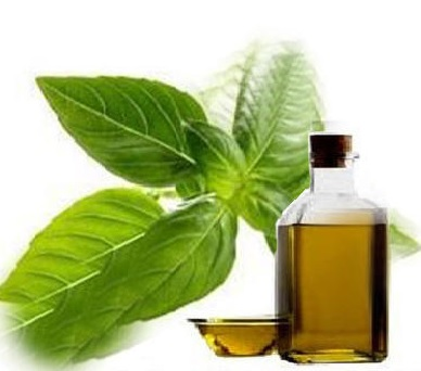 Mint Oil Benefits For Skin and Hair...