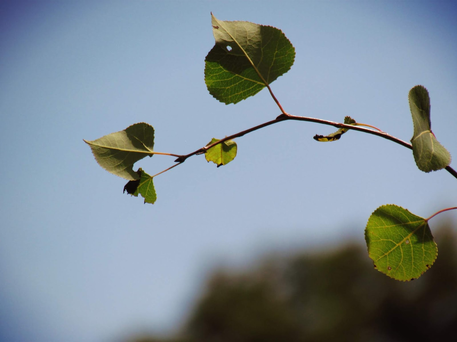Blur Photography of a Vining Leaf in Nature and Tree Branches Reaching for Blue Skies in a Moody Photograph