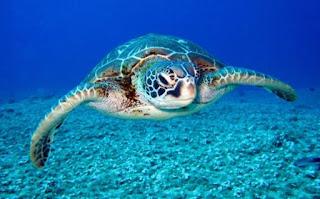 कछुए की जानकारी दें ▷ some facts about turtle in hindi