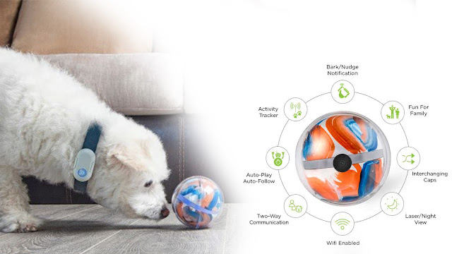 Amazing Useful Gadgets For Pets