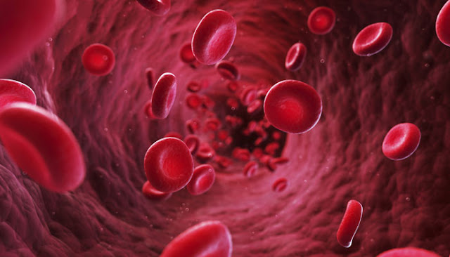 Vegetarian Blood Is 8x More Effective At Killing Cancer Cells