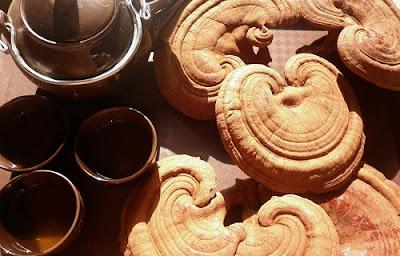 Một số cách chế biến trà nấm linh chi
