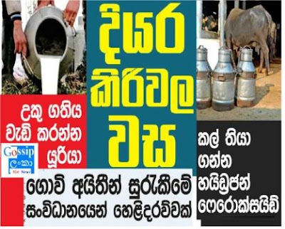 Sri Lanka Raw milk producers add harmful chemicals to preserve milk