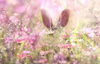 ternak kelinci pedaging, ternak kelinci, tips ternak kelinci, tips ternak kelinci pedagang, cara ternak kelinci, cara ternak kelinci pedaging, kelinci, kelinci pedaging, ternak kelinci modern