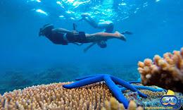open trip dan wisata pulau harapan