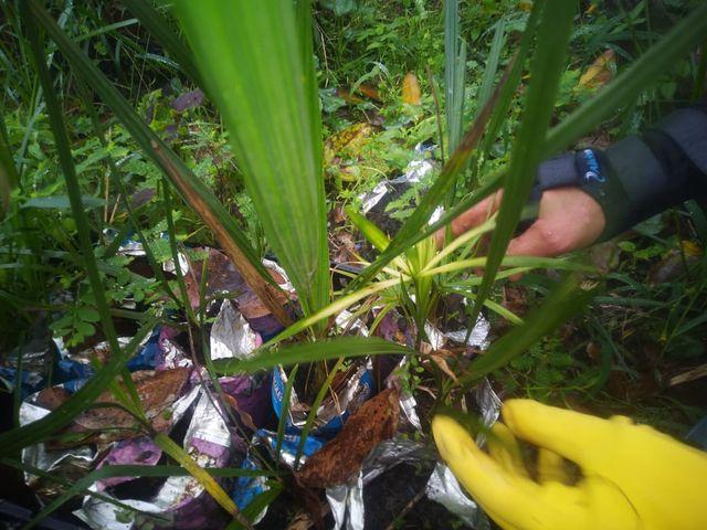 Ilha Comprida promove na terça 21/09 plantio de mudas no Parque Linear com participação de estudantes