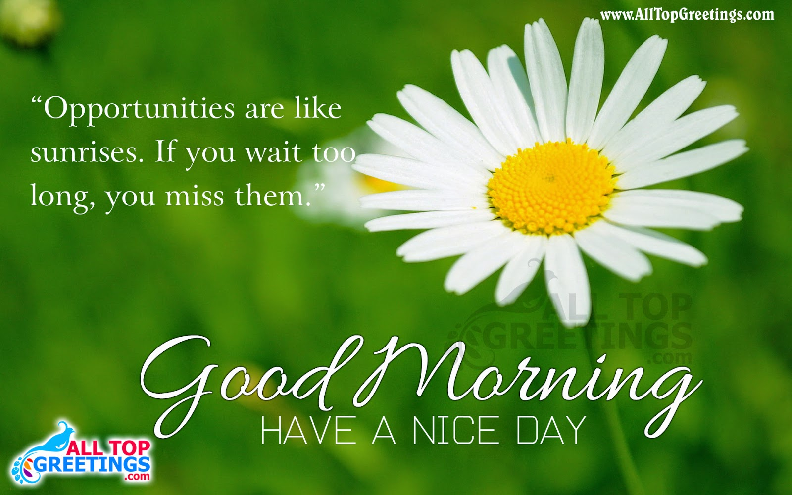 Good Morning Quotes In English Hd Collection Zone