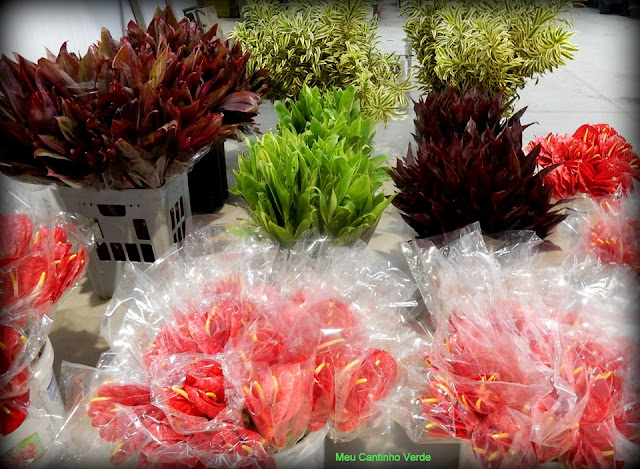 Ceaflor novo mercado de flores da região de Holambra
