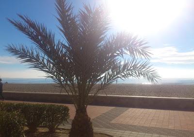För mycket sol? Än så länge gratis att avnjuta på stranden.