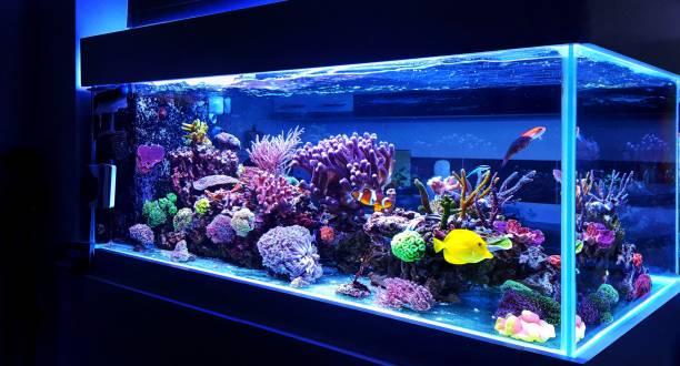 Setting Up a Saltwater Aquarium – The Tank