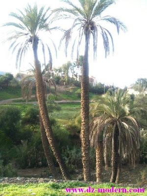 صورة منطقة المالحة بمدينة عمي موسى