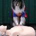 Ο σκύλος που παρέχει πρώτες βοήθειες και σώζει ζωές