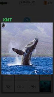 1100 слов плавает кит в океане на 19 уровне