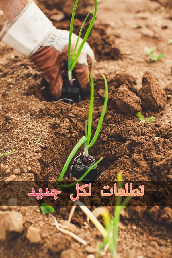 كلية الزراعة جامعة الأزهر