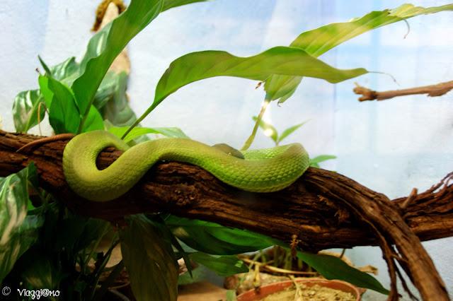 Uno dei serpenti presenti nel rettilario del parco