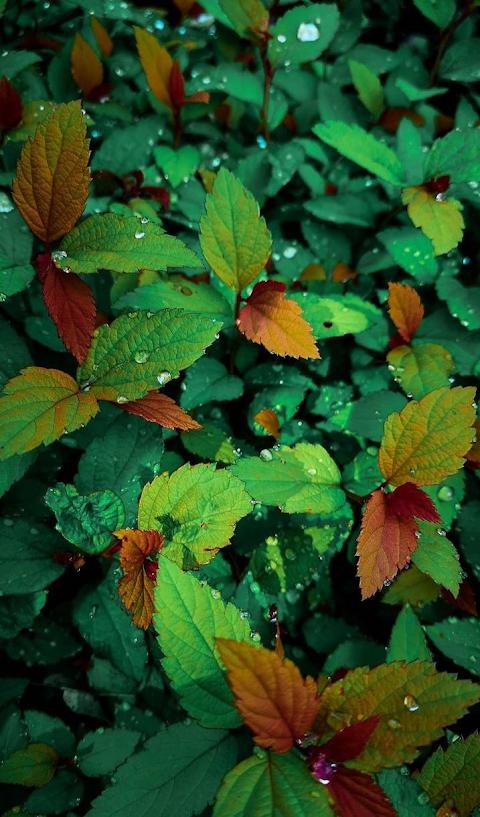 Những chiếc lá mùa xuân