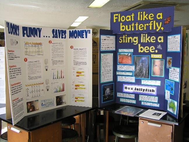 School Science Fair Projects | Grade Science