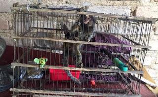 Animais silvestres são resgatados de uma residência na Chapada Diamantina