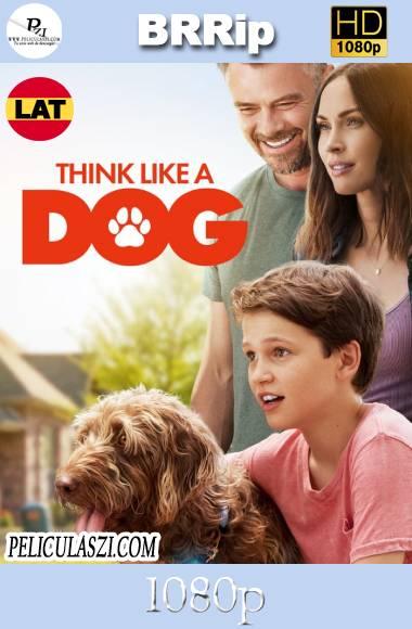 Think Like a Dog (2020) HD BRRip 1080p Dual-Latino