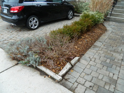 York Humewood Fall Cleanup Front Yard After by Paul Jung Gardening Services--a Toronto Organic Gardening Company