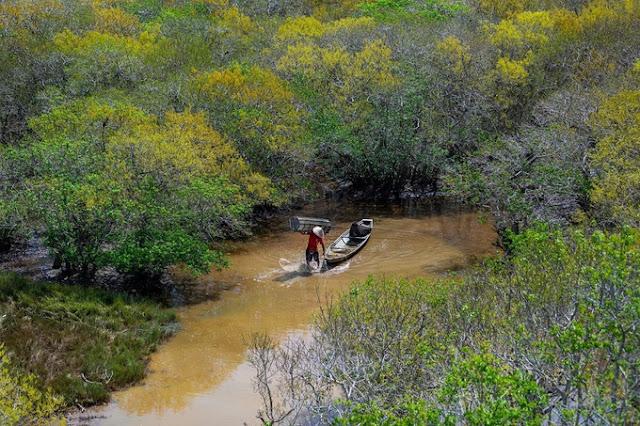 Ru Cha mangrove forest