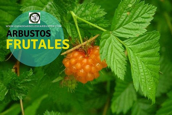Ficha de arbustos frutales en españa, información útil sobre su plantación