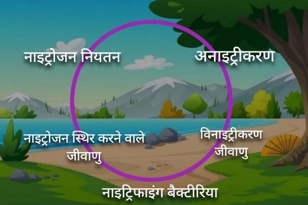 नाईट्रोजन चक्र जैव भूरासायनिक चक्र Biogeochemical cycle in hindi